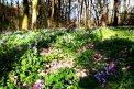 Fotografia: Háj na jar, fotograf: Viktor Šulák, tagy: haj,jar,kvety