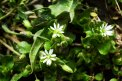 Fotografia: Burinka, fotograf: Viktor Šulák, tagy: kvety,burina