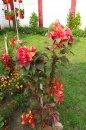 Fotografia: Kvety v zahrade, fotograf: Juraj Belanji, tagy: kvet, zahrada, vivid