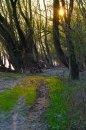 Fotografia: dunajský chodníček, fotograf: Viktor Šulák, tagy: slnko, stromy, pobrezie