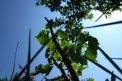 Fotografia: pohľad na svet okom mravca, fotograf: Stefan Schwartz, tagy: bonsaj, lipa