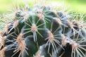 Fotografia: Kaktus , fotograf: Jaroslav Ligyak, tagy: kaktus