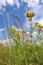 Fotografia: Lúka, fotograf: Martin Nagy, tagy: lúka, kvety, obloha
