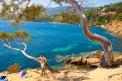 Fotografia: Preplnená pláž? To nie., fotograf: Matej Červeňák, tagy: stromy, more