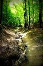 Fotografia: les, fotograf: Samuel Hrica, tagy: stromy