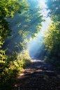 Fotografia: Svetelné lúče, fotograf: Nicol Urbanová, tagy: Príroda, Maďarsko, ráno