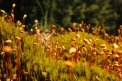 Fotografia: Maličký les, fotograf: Matus Kosut, tagy: lesom, slovensko