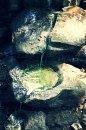Fotografia: Lesný prameň, fotograf: Adam Petnuch, tagy: Čistá voda