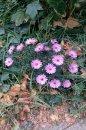 Fotografia: kvetiny v prírode, fotograf: Dominik Čeliga, tagy: príroda , kvetiny v prírode