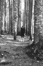 Fotografia: Temný les, fotograf: Peter  Hudeček, tagy: les