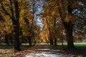 Fotografia: Park na jeseň, fotograf: Patrik Polakovič, tagy: park