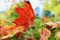 Fotografia: Jeseň kráľovná farieb, fotograf: Jakub Manina, tagy: jesen, farby, listy v trave