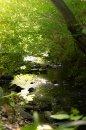 Fotografia: Potok v lese., fotograf: Alen  Kaćanski, tagy: potok, rieka, les