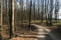 Fotografia: Krásny les, fotograf: Jessica Szalaiová, tagy: #art