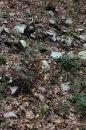 Fotografia: Kamene a listie, fotograf: Lukáš Geršič, tagy: priroda