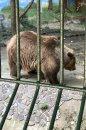 Fotografia: medved, fotograf: Lukáš Geršič, tagy: medved