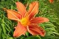 Fotografia: Giant flower, fotograf: Tomáš Škriečka, tagy: kvet, oranžová