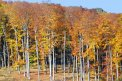 Fotografia: Farby jesene, fotograf: Martina Kukučková, tagy: stromy, listy, jesen
