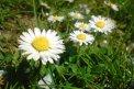 Fotografia: drobné radosti, fotograf: Stefan Schwartz, tagy: mobil, kvety