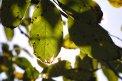 Fotografia: Jesenné slnko, fotograf: Tomáš Fedaš, tagy: slnko, list, listy, strom, stromy, jeseň