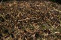 Fotografia: Mravenisko je plné čiarok., fotograf: Mária Pohronská, tagy: mravce, ihličie, čiara