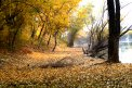 Fotografia: Čaro jesene, fotograf: Dominika Rybárová, tagy: jeseň, lístie, krajina