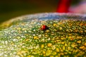 Fotografia: LadyBird, fotograf: Slavka Szaboova, tagy: lienka