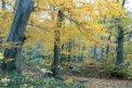Fotografia: PredSpánkom, fotograf: Marek Pinter, tagy: les, jeseň, žltá