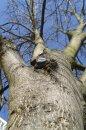 Fotografia: pohľad zdola, fotograf: Dominika Červeňová, tagy: strom, obloha