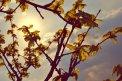 Fotografia: Keď slnko šatí listy do zlata, fotograf: Veronika Pilátová, tagy: strom, konáre, slnko, listy