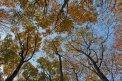 Fotografia: Stromy siahajúce do neba, fotograf: Marek Duranský, tagy: Stromy, obloha