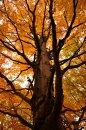 Fotografia: Prepojená sieť, fotograf: Magdaléna Struhárová, tagy: strom, jeseň, listy, príroda