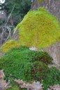 Fotografia: Nieje zelená ako zelená, fotograf: Nikto Nikto, tagy: príroda drevo strom mach