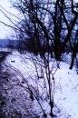 Fotografia: okraj lesa, fotograf: Tomas Vozarik, tagy: okraj