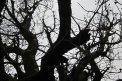 Fotografia: strom, fotograf: Tomáš Stadničár, tagy: strom
