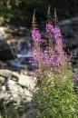 Fotografia: Sviezost prirody, fotograf: Peter Kvasnicak, tagy: Kvety, Priroda, Orava, Fresh
