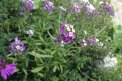 Fotografia: Kde bolo tam bolo za Atriakmi, fotograf: Katarina Rafcikova, tagy: flowers, nature, priroda, kvetiny