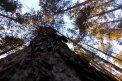Fotografia: strom do neba, fotograf: Martina Ďurišová, tagy: tree