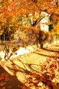 Fotografia: Jeseň, fotograf: Eva  Parigalová, tagy: jeseň