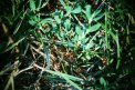Fotografia: Sila malých mravcov, fotograf: Erik Mesároš, tagy: mravec, sila,