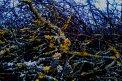 Fotografia: Nakazený strom., fotograf: Peter  Hudeček, tagy: strom,príroda