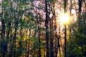 Fotografia: V lese..., fotograf: Vladimír Tešovič, tagy: Les