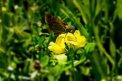 Fotografia: Motýľ, fotograf: Krisztian Psota, tagy: motýľ