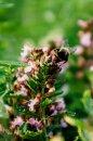 Fotografia: Čmeliak, fotograf: Erik Mihalda, tagy: Príroda, farby, rastliny, krása